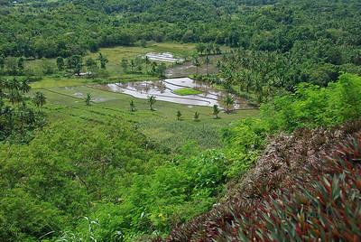 Rice paddies. Carmen, Bohol