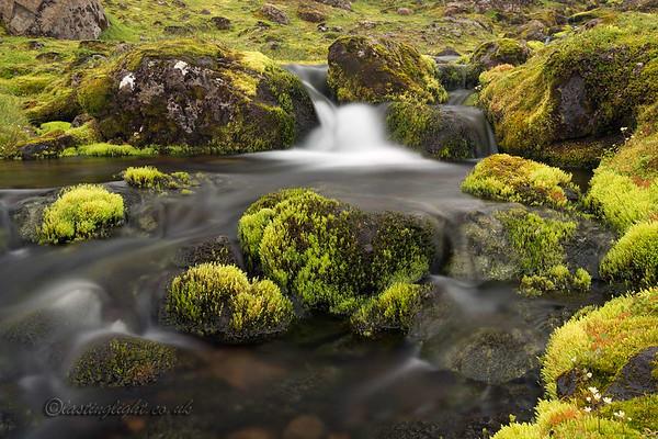 Mountain Moss 2