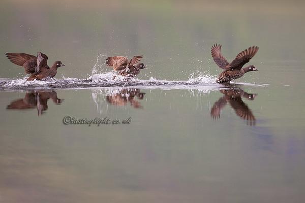 Ladies take flight