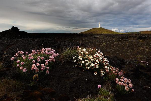 Reykjanesta