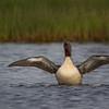 redneck-duck!