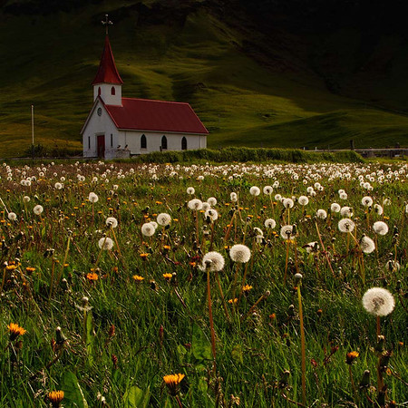 church-in-dandelions