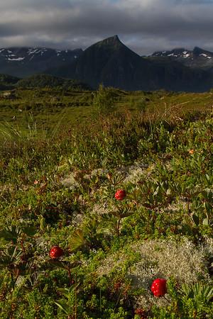 Cloudberries