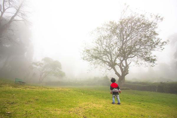 Chettiar Park Kodaikanal