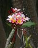Flowers on the Hana Road