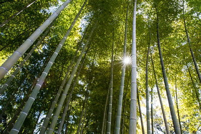 Bamboo in Tokyo