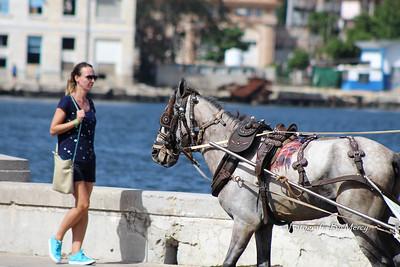 Havana, Cuba El Malecon