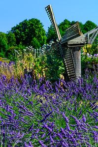 Lavender Calm