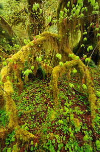 Spring Time In the Rain Forest
