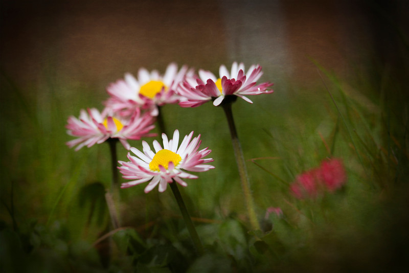 IMG_9316-retouch