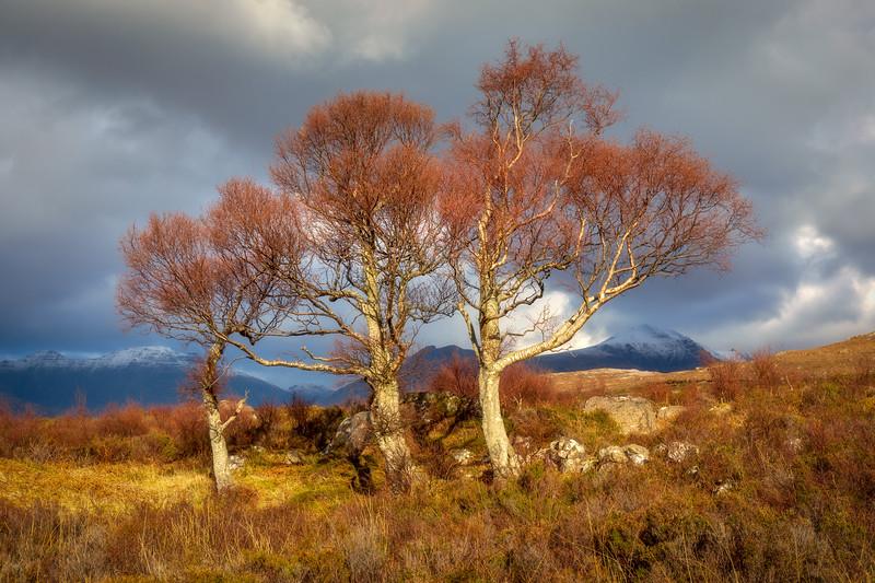 Three Trees, Scottish Highlands