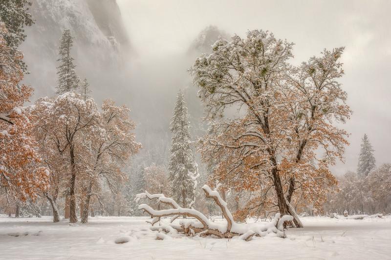 El Cap Meadow Transition of Seasons