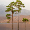 Scots Pines, Loch Clair