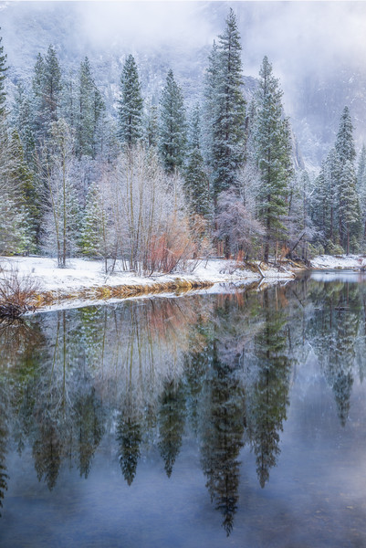 Snowy Tree Reflections, Merced River