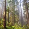Foggy Damnation Creek Trail