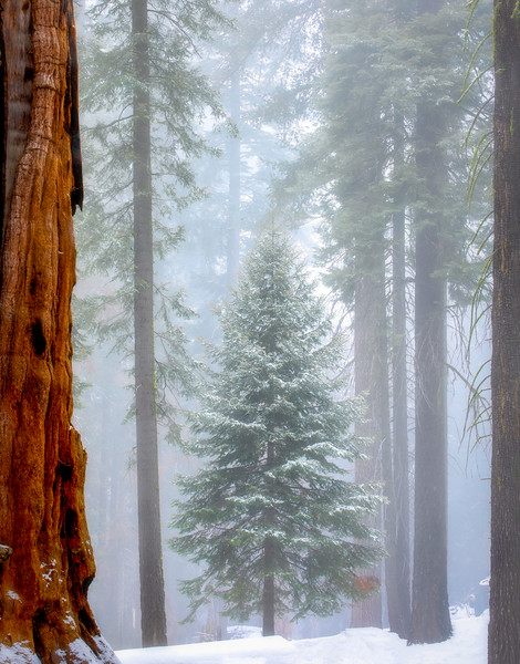 Tiny Sequoia Framed View