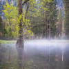 Seasonal Pond Morning Mist