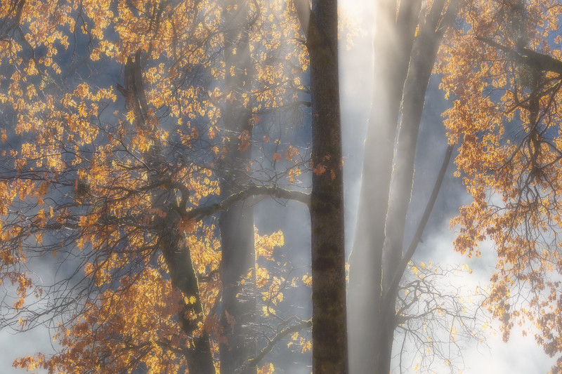 Black Oak Mist