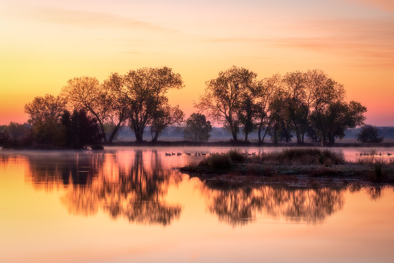Tree Reflections and Geese, Rancho Murieta