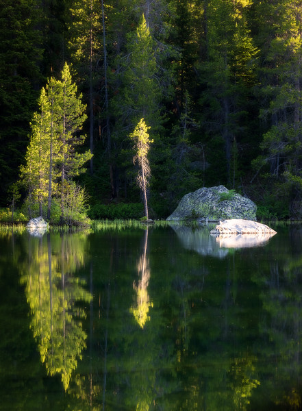 Little Tree Illuminated, Grand Teton NP