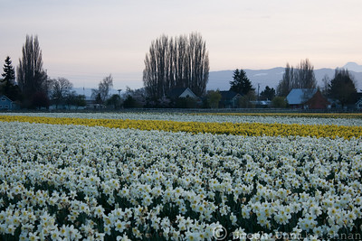 skagit valley-11
