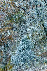 Frost Tree in Shenandoah