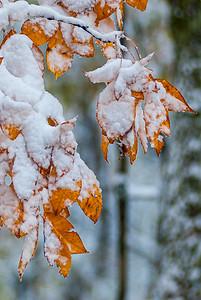 Fall Leaves in Shenandoah