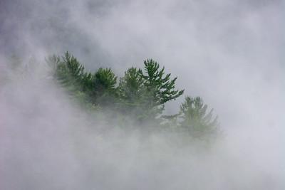 Smokey Tree