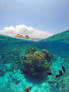 Vanuatu coral gardens
