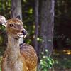 <b>Deer</b>