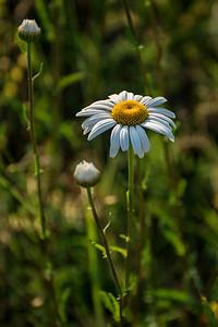 Effloresce