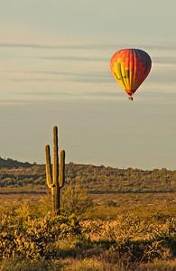 Soaring Saguaro