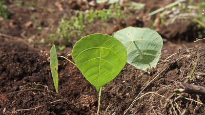 Sowing The Seeds of Love - EcoWarriors Tree Planting 1