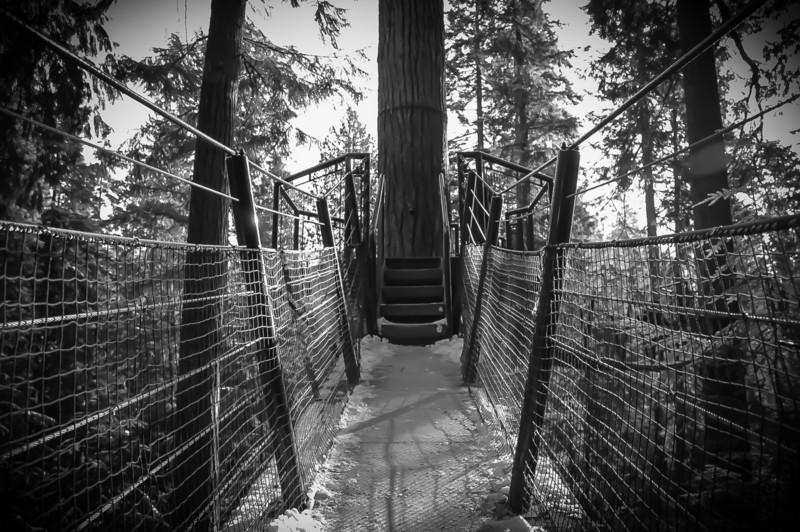 Treetop Adventure, Vancouver, British Columbia.