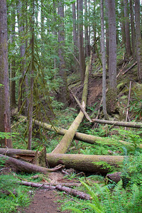 Port Angeles, Olympic National Park, Lake Angeles Trail