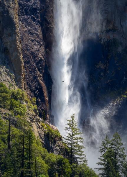 Swallow in Flight, Bridalveil Fall