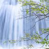 Cascade Creek Tree Branch