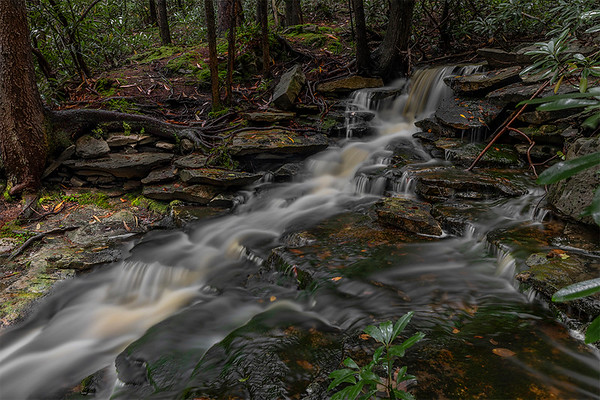 Spring Rains on the Blackwater River