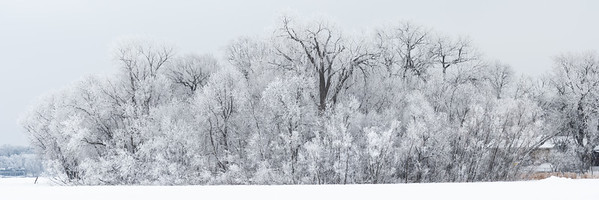 The Lake's Frost (Pano)
