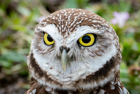 Eyes of the Owl II