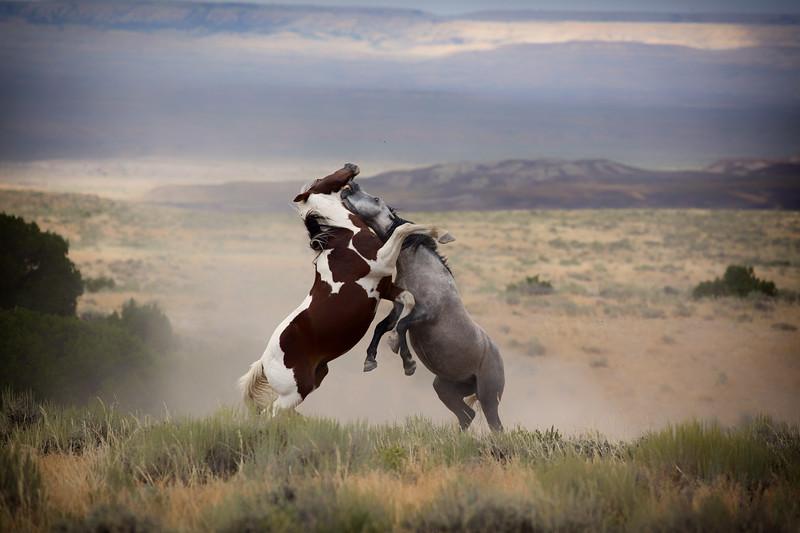 War Horses X