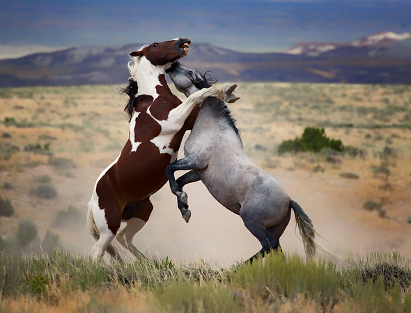 War Horses VII