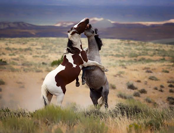War Horses II