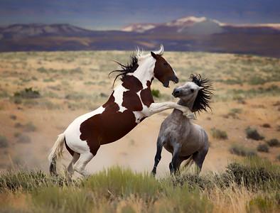 War Horses V