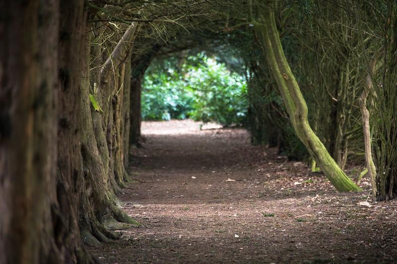 Woodland walkway