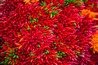 Colourful Chillies (Capsicum sp.)