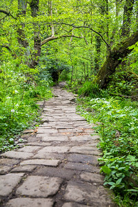 Cobbled forest path