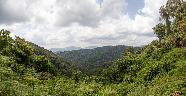 Biwindi rainforest