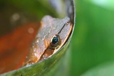 Unknown Frog Species