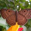 Butterfly (Shot by Koah)